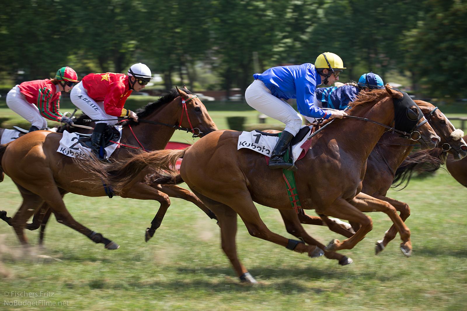 pferde rennen